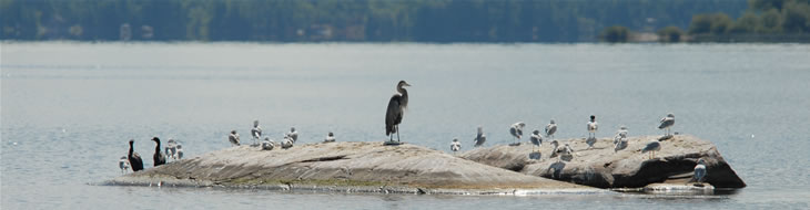 Birds on a Rock Island